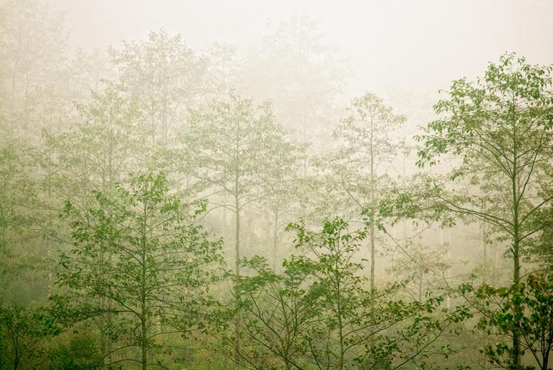 Tree & Mist